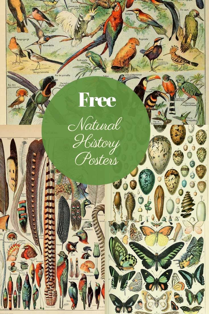 Free vintage natural history posters adolphe millot
