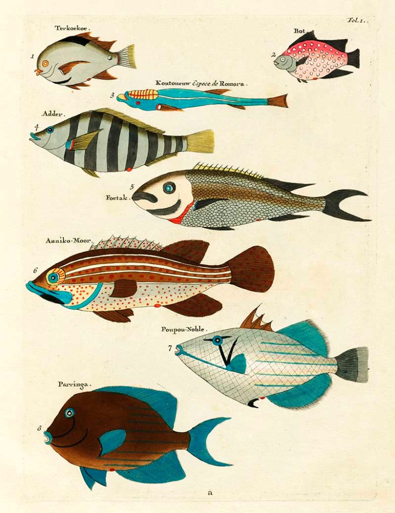 Exotic fish drawings 1-8