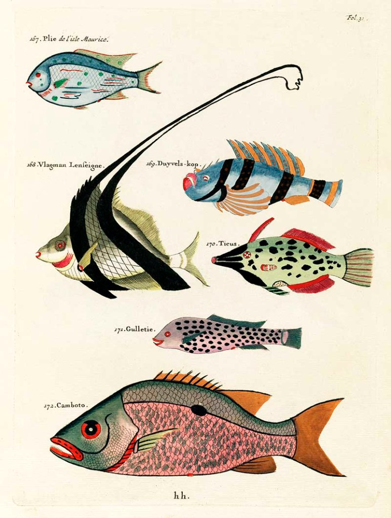 Fish painintgs 167-172_Louis_Renard