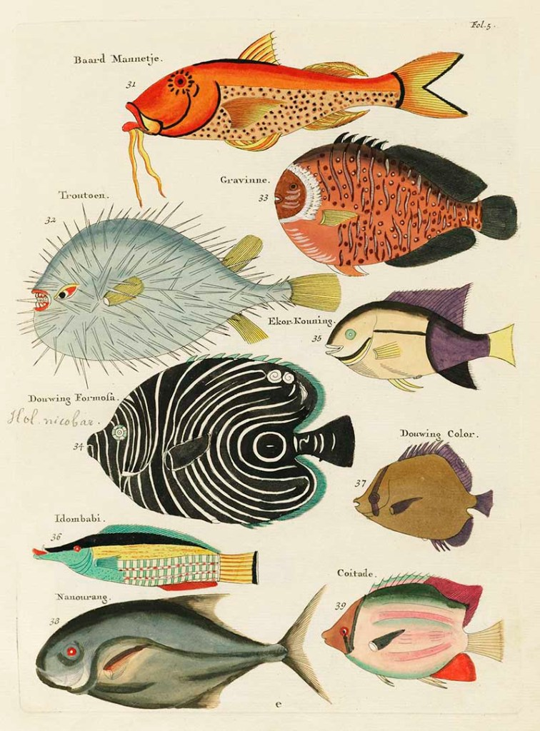 Free antique fish prints to download