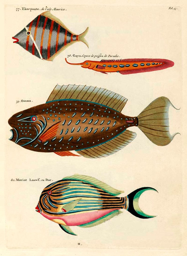 Louis Renard antique fish prints 77-80