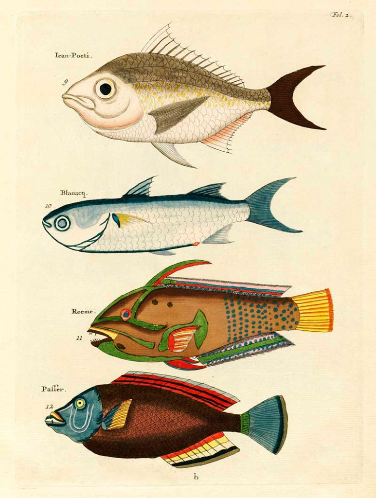 Antique fish drawings 9-12