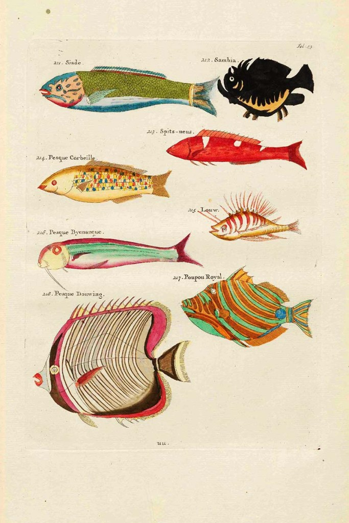 Fish paintings 211-218 Siade Louis_Renard