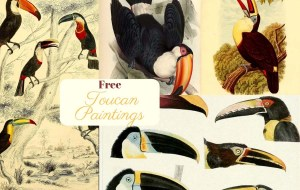 Toucan Paintings copyright free