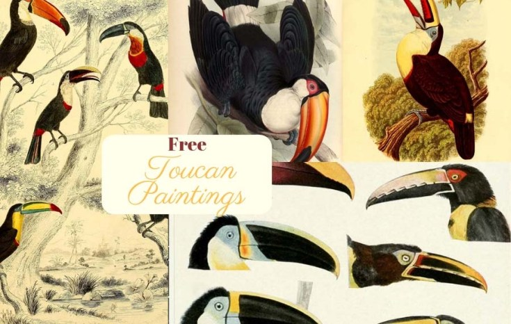 A Beautiful Copyright Free Collection Of Toucan Paintings