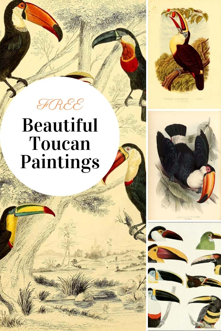 Toucans are a very unusual and distinctive looking tropical bird.  Here is a collection of fabulous and colorful Toucan paintings.  Copyright free. #Toucan