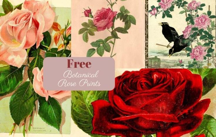 Botanical Rose Prints