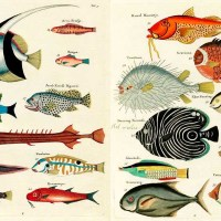 The Beautiful Fish Paintings Of Louis Renard