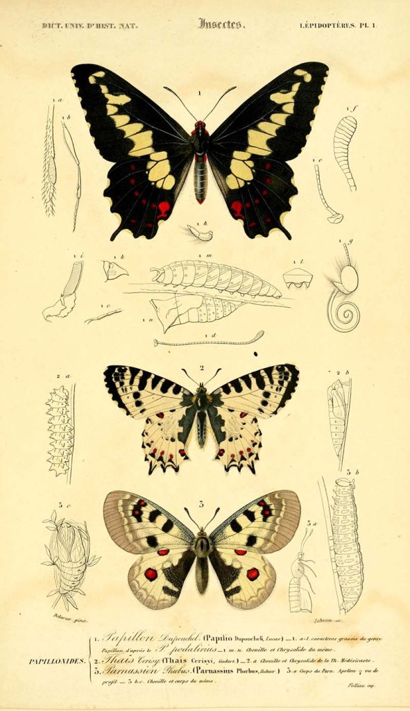 Butterfly plate 1.