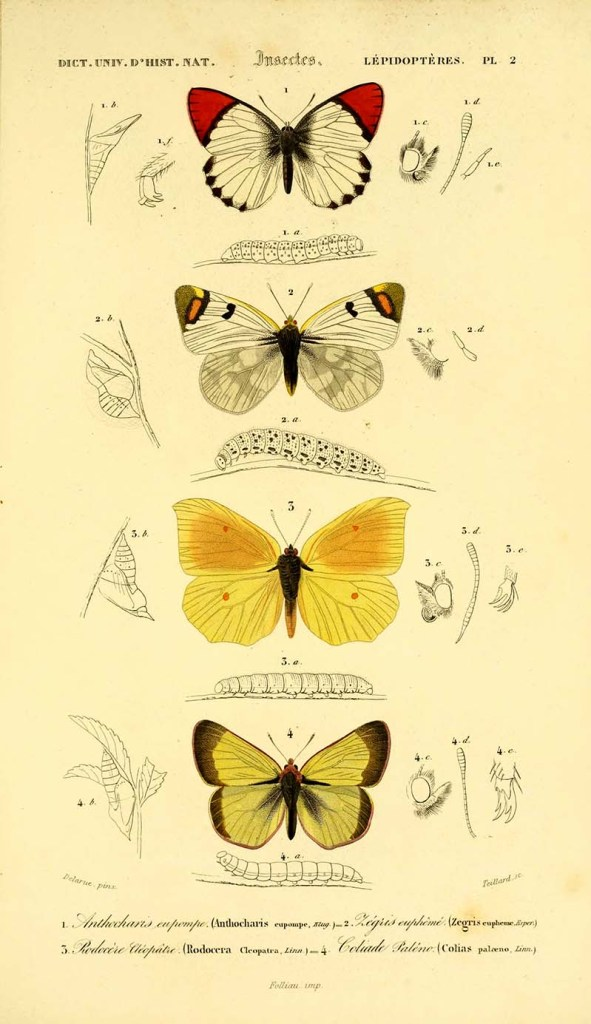butterfly plate 2