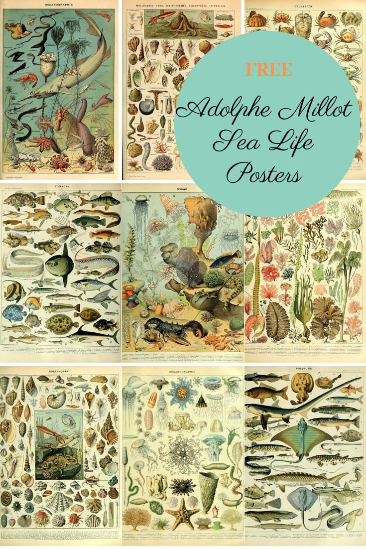 Sea life posters of Adolphe Millot