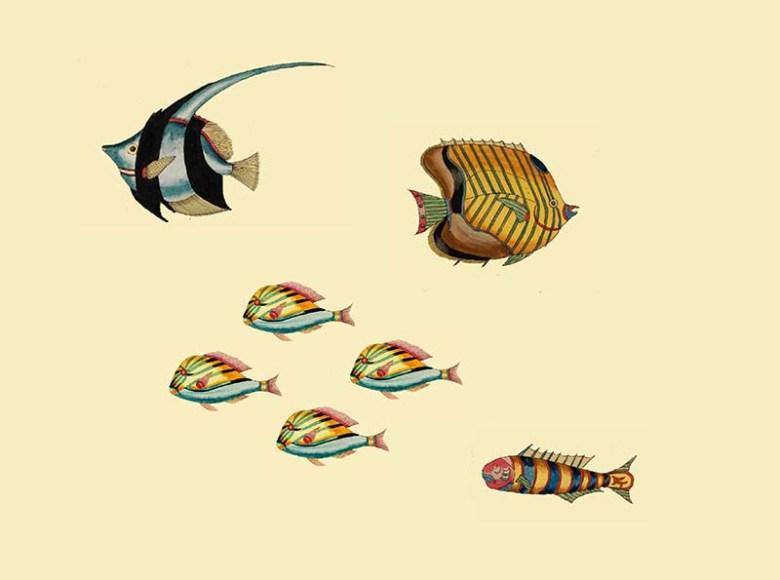 Aquarium 1 Louis Renard