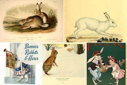 Easter Bunny Pictures, rabbit and hare illustrations