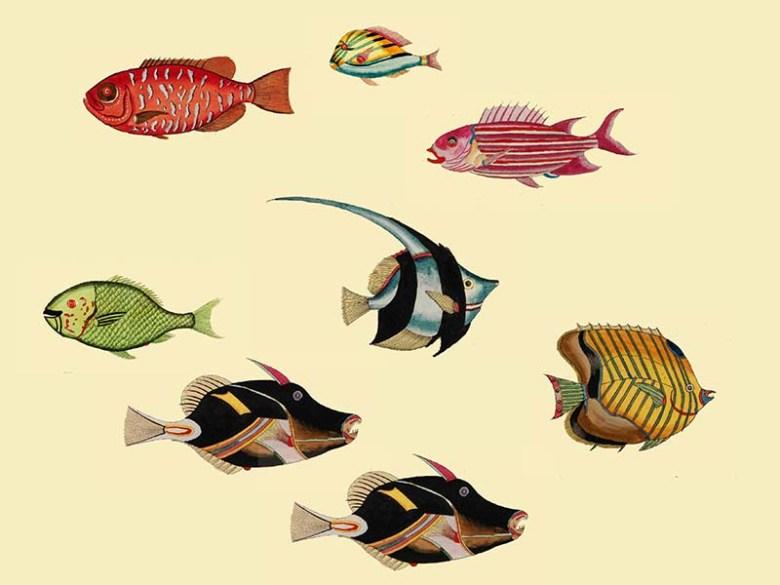 Louis Renard aquarium 3