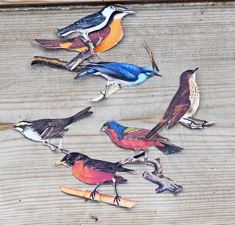 cut out songbird images
