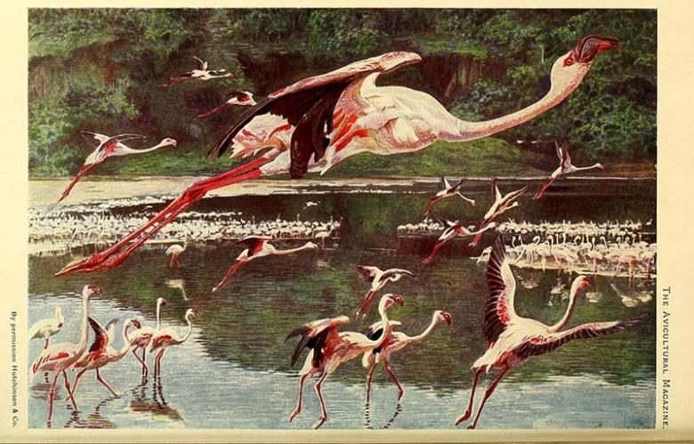 flamboyance of flamingos painting