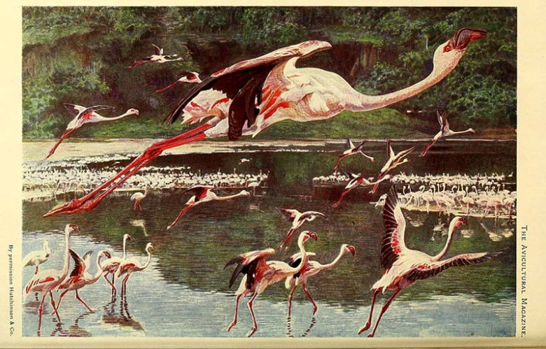 flamboyance of flamingos painting