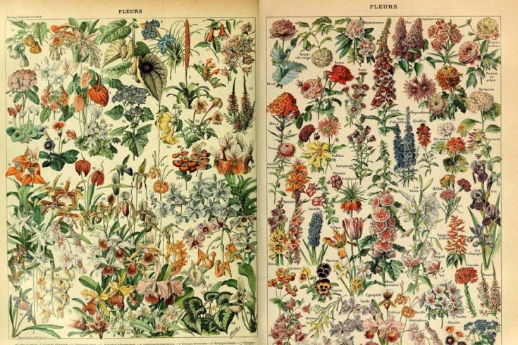 Amazing Collection Of Antique Botanical Floral Posters