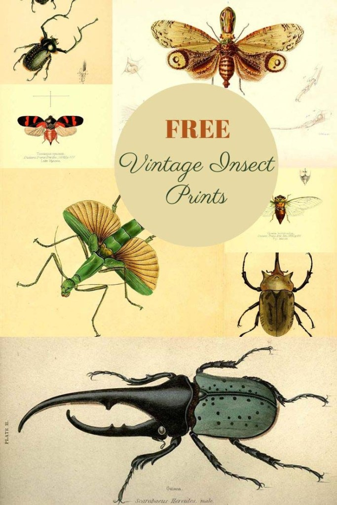 Vintage free insect prints
