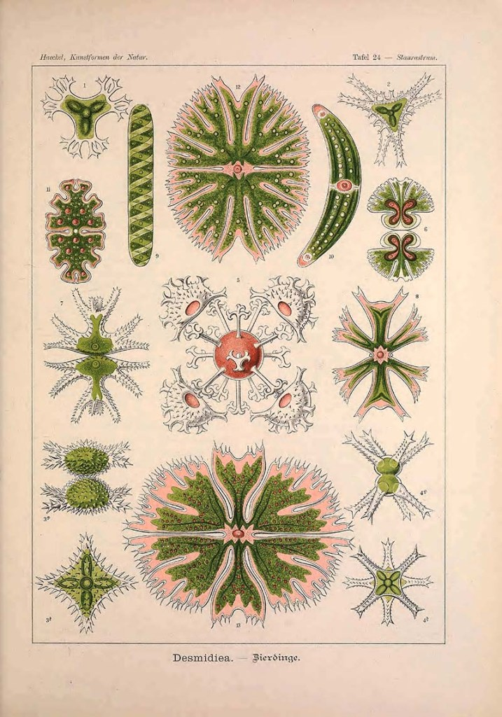 Green Algae Print Kunstformen Der Natur