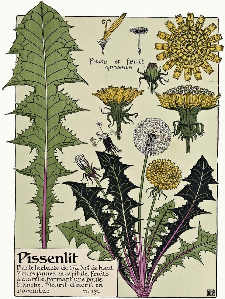 Beautiful Free Art Nouveau Flower Prints