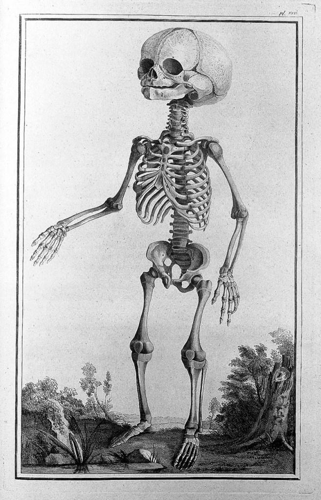 Skeleton picture