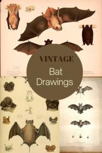 Free vintage bat images