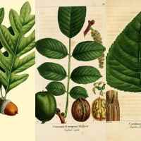 Wonderful Antique Botanical Leaf Prints From The Forest