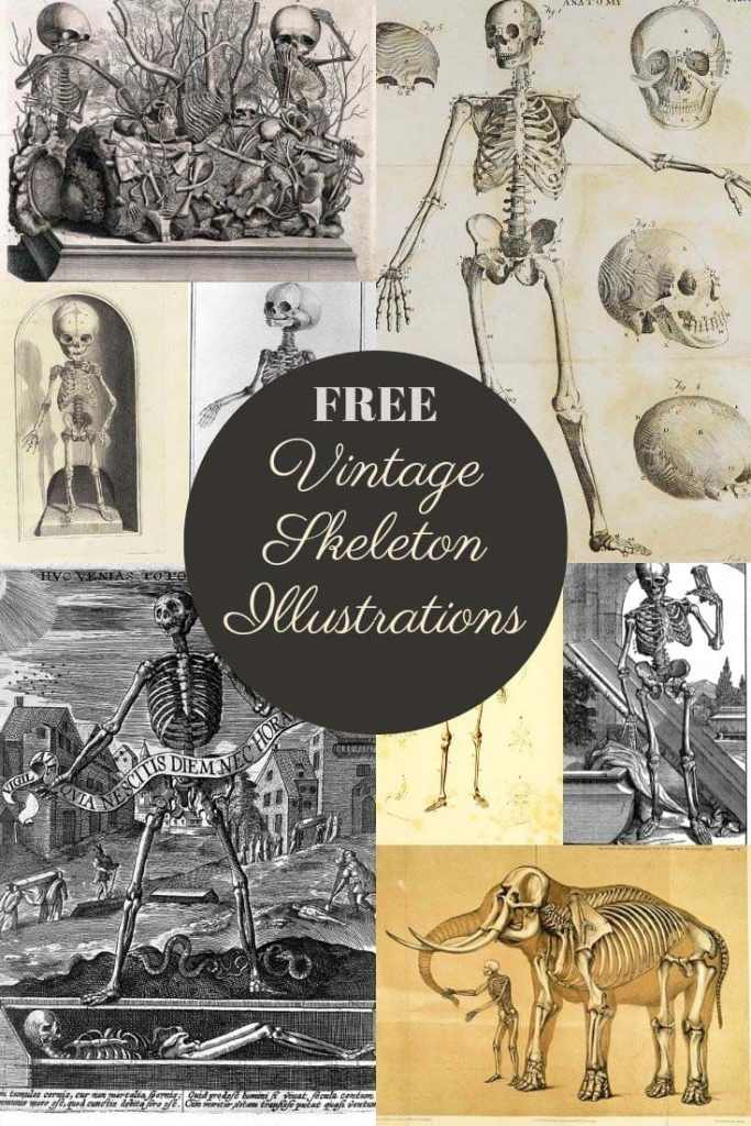 Halloween skeleton illustrations