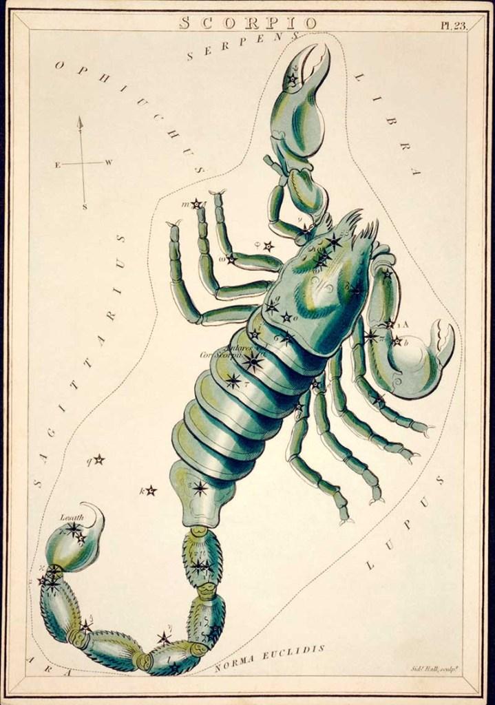 Scorpio Zodiac illustriation