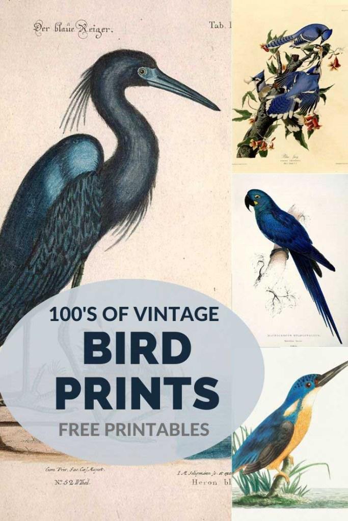 Free vintage bird paintings
