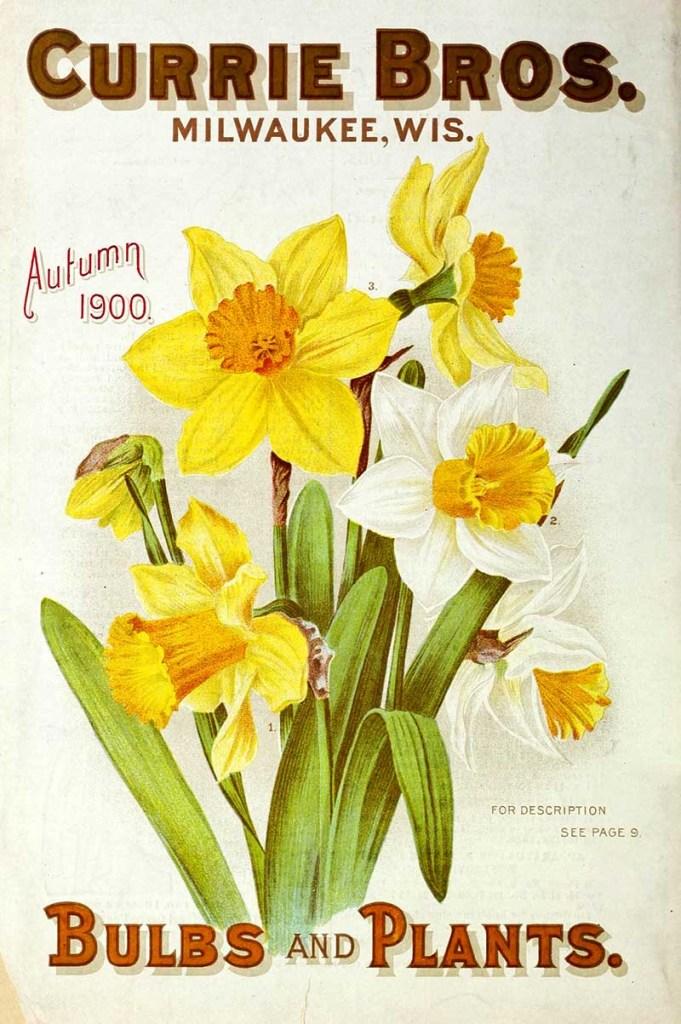Daffodil seed packet