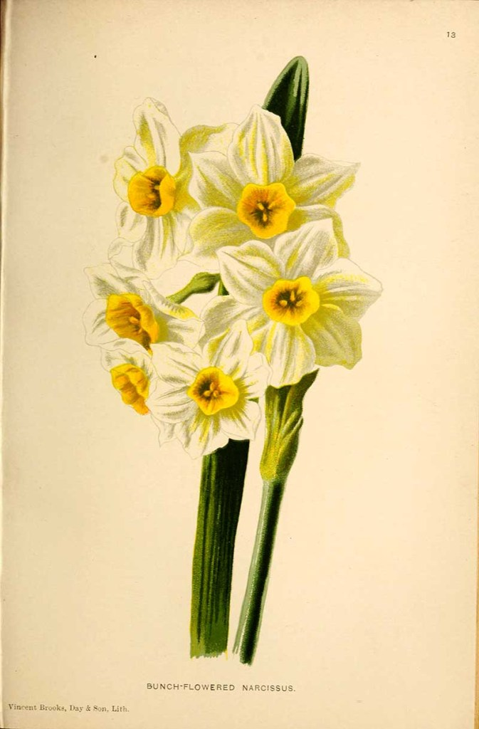 bunch of daffodil flowers