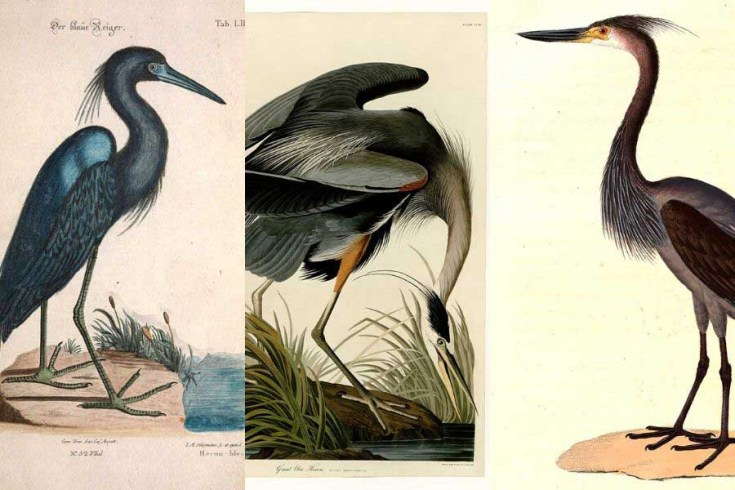 Beautiful Heron Paintings To Download For Free