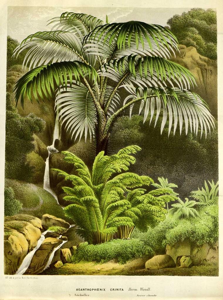 Vintage tropical plant print