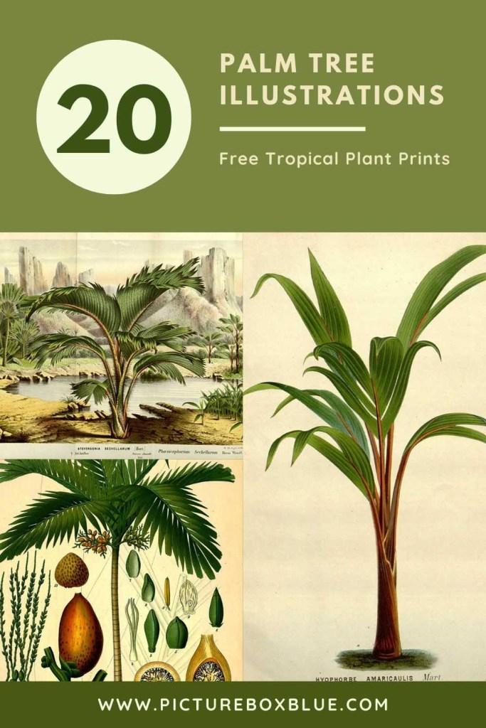 20 free palm tree illustrations