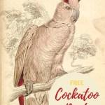 cockatoo print