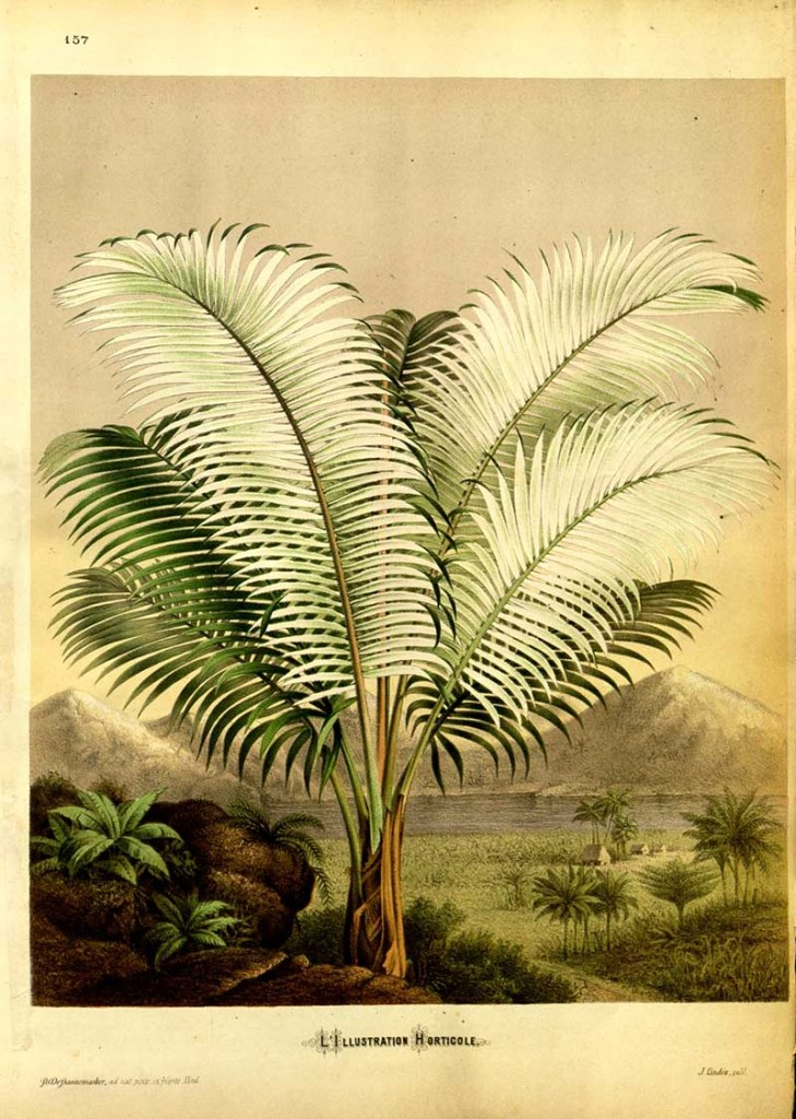 Tropical Plant prints