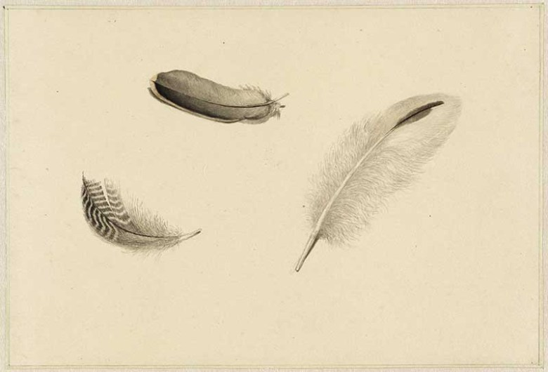 three feathers Dirk Salm