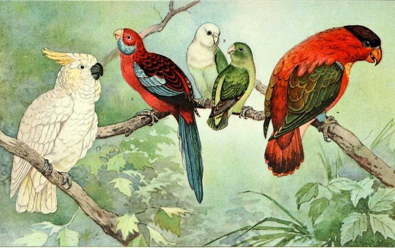 Free print of cockatoos and parrots