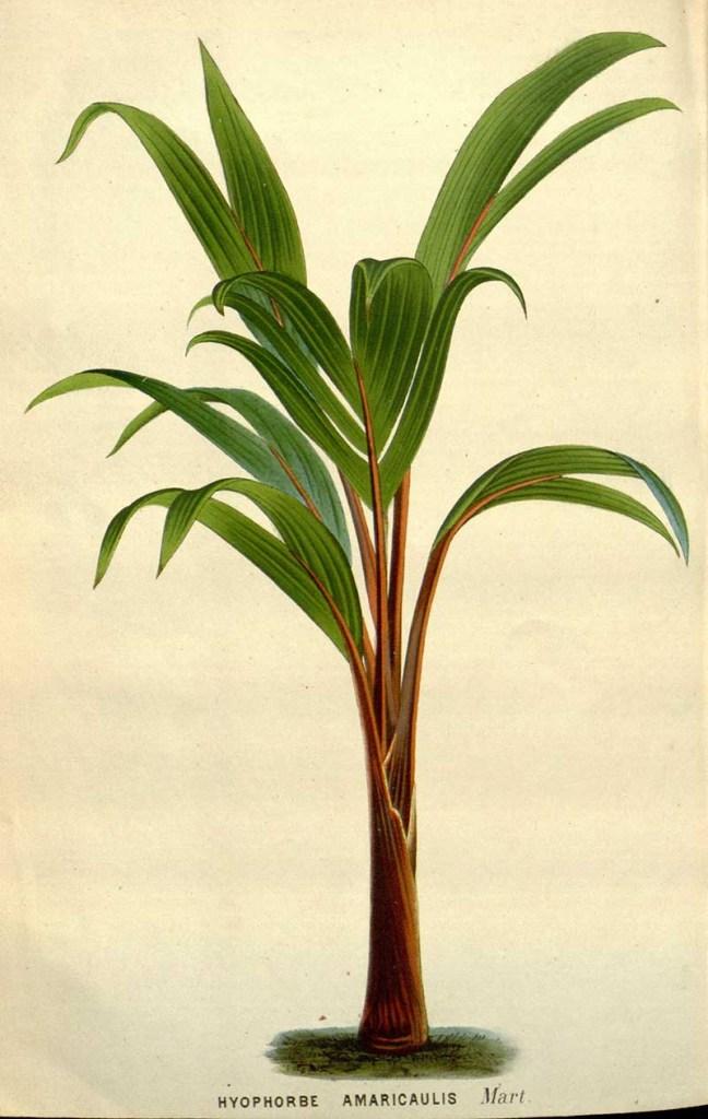 Loneliest palm tree