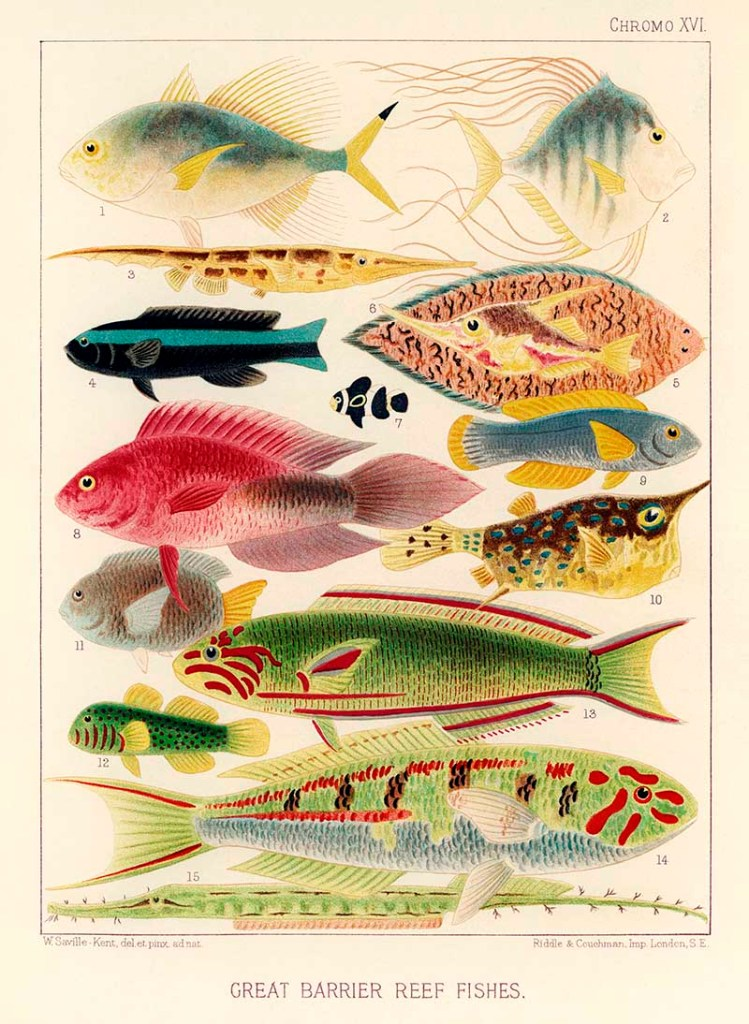 Great Barrier Reef Fishes