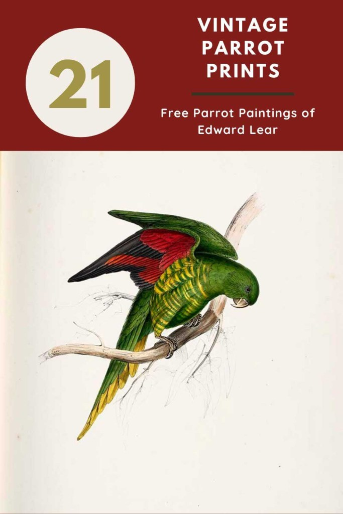 21 Parrots
