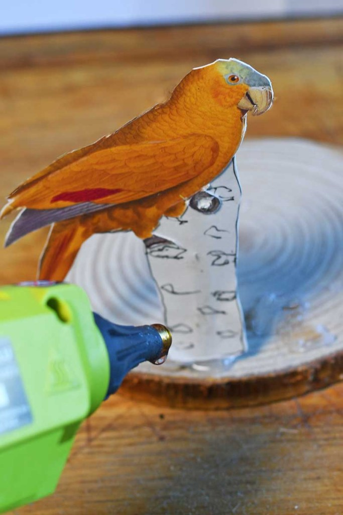 gluing paper parrots to the wood slice base