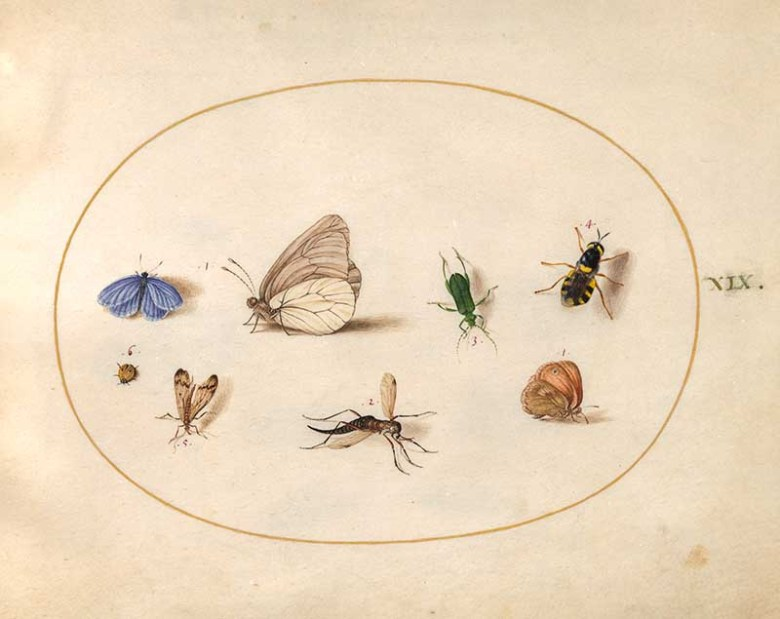 plate 19 assorted insects