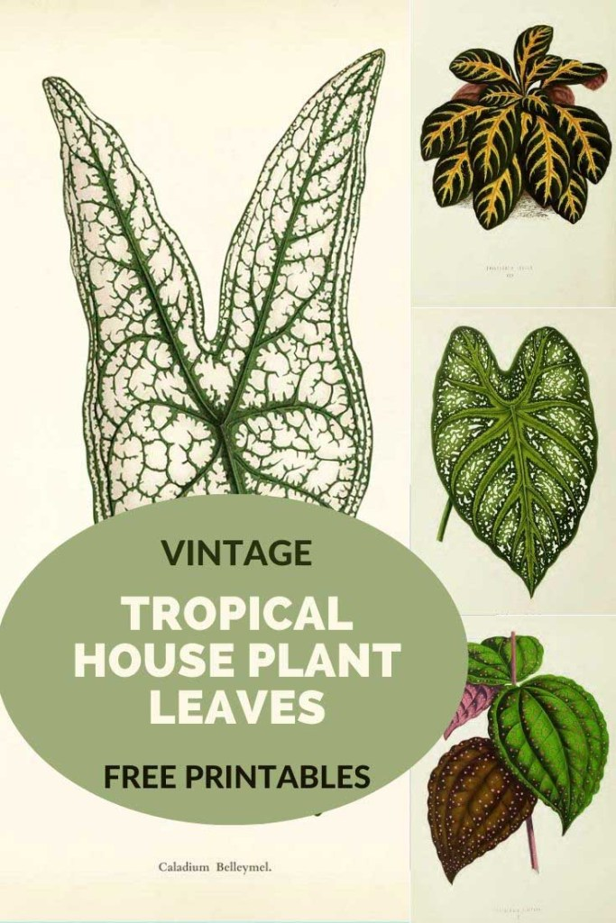 Victorian House Plant drawings