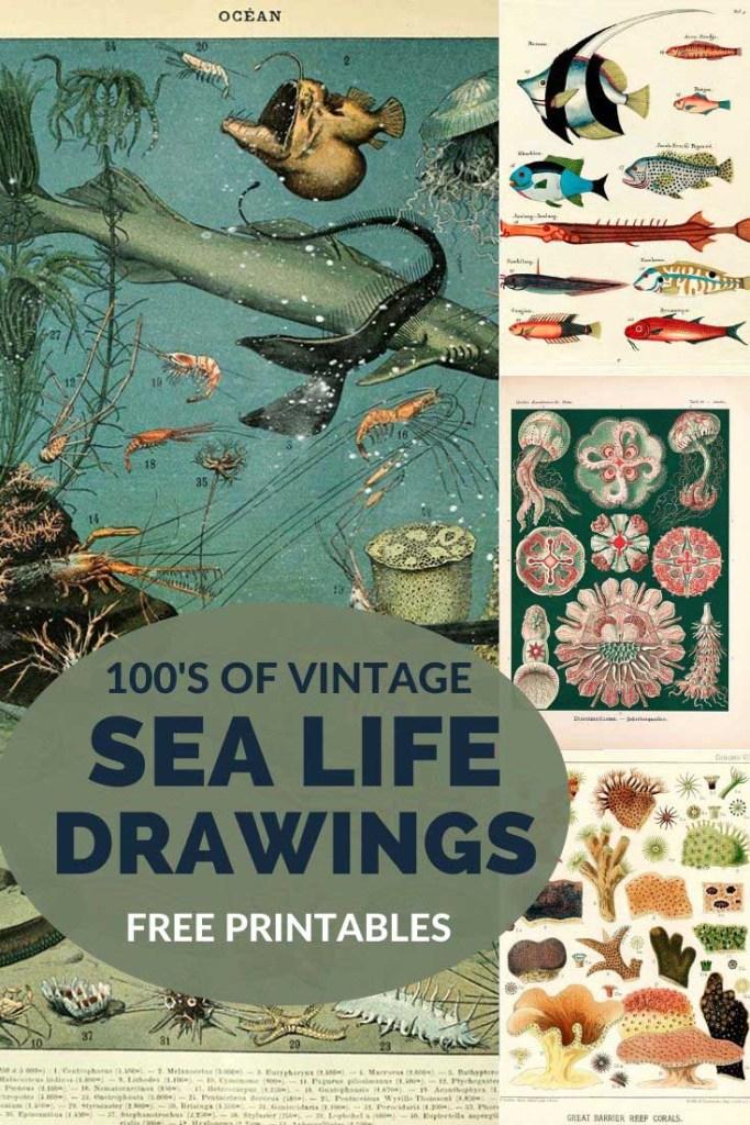 Vintage sea life images