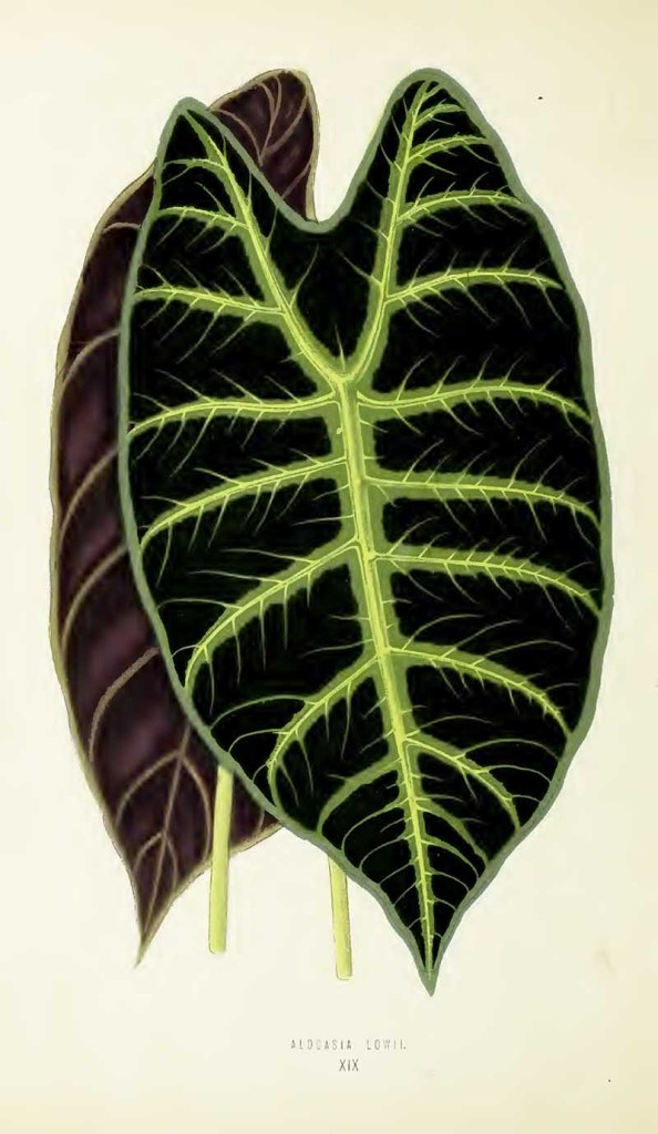 house plant leaf drawing