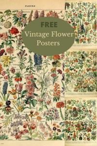 Vintage floral posters