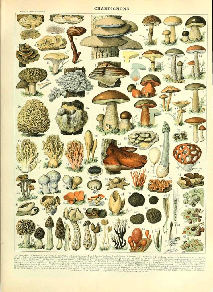Mushroom poster Adolphe Millot